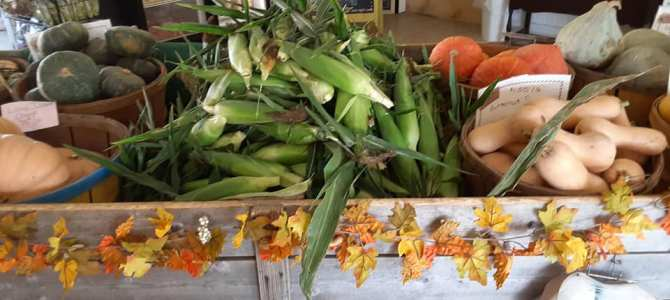 Sweet corn, still picked fresh for you! The season is almost over for this year! See you soon!