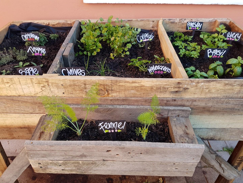 First Herb Garden