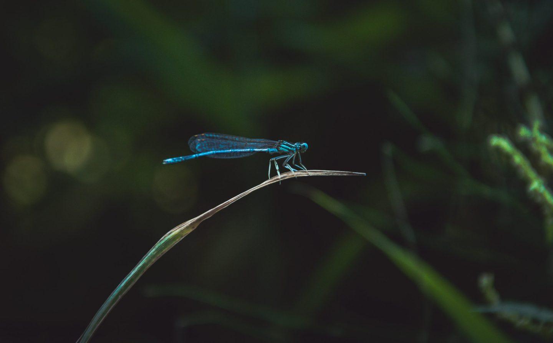 The dragonfly visitation