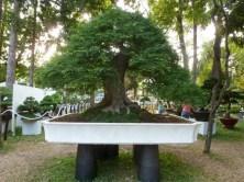 Bonsai in der Gartenausstellung