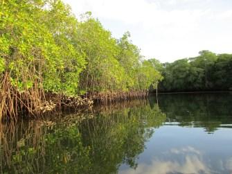 Tour durch die Mangroven