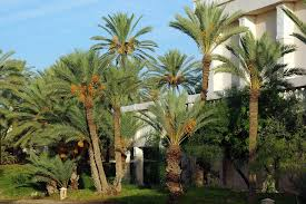florida palm trees - millerstreecare.com