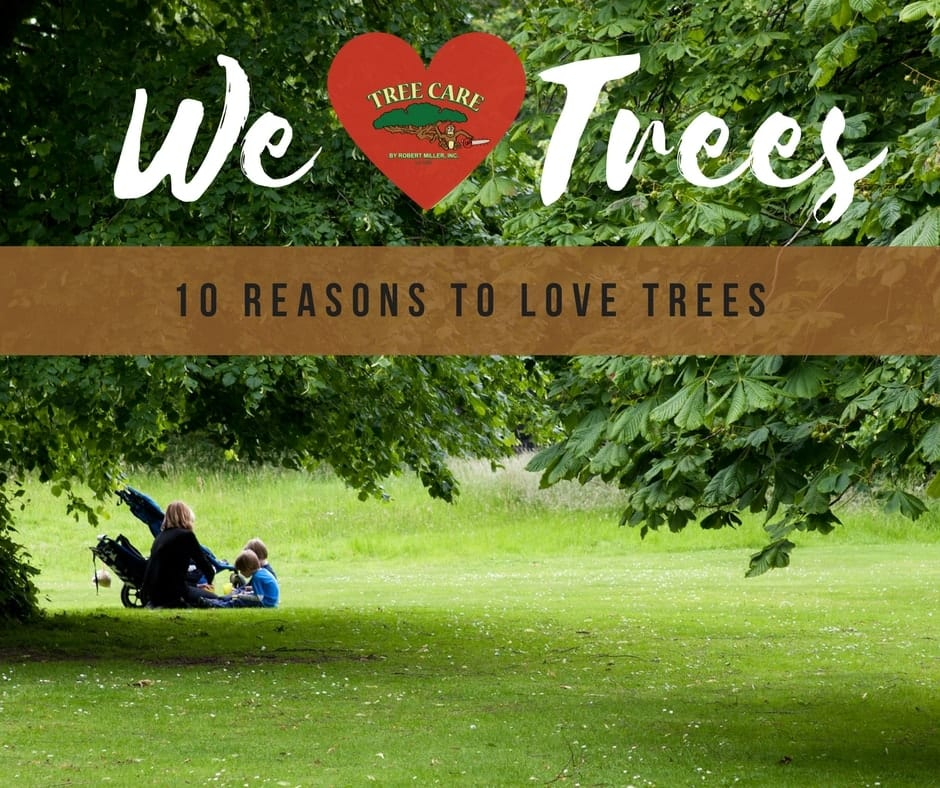 10 Reasons to Love Trees | Brooksville Picnic