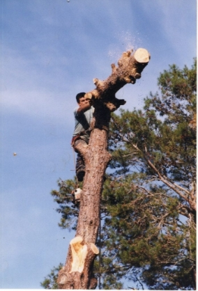 Tree climber removing a tree in pieces - Tree Care in Brooksville