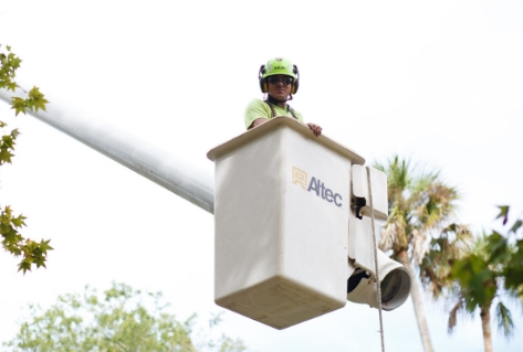 Foreman, Jeff Trent, in bucket above palm trees