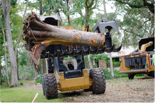 tree removal - tree stump in bobcat