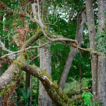 Hazardous Tree Removal - Tree Care by Robert Miller