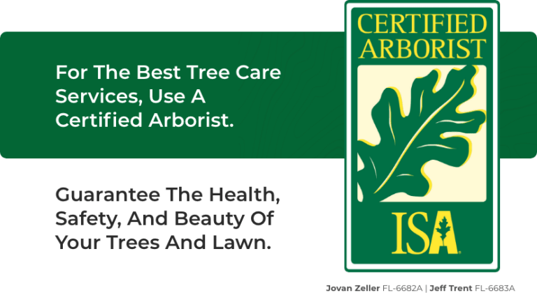 Why choose a Certified Arborist? | Brooksville Tree Services