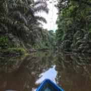 Balade en bateau dans les canaux de Tortuguero
