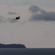 Ara macao en vol au dessus de l'océan