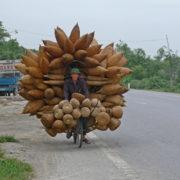 Transport de nasses