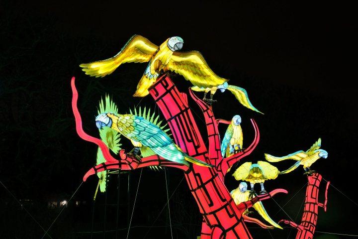 Illumination-JardinDesPlantes-0021