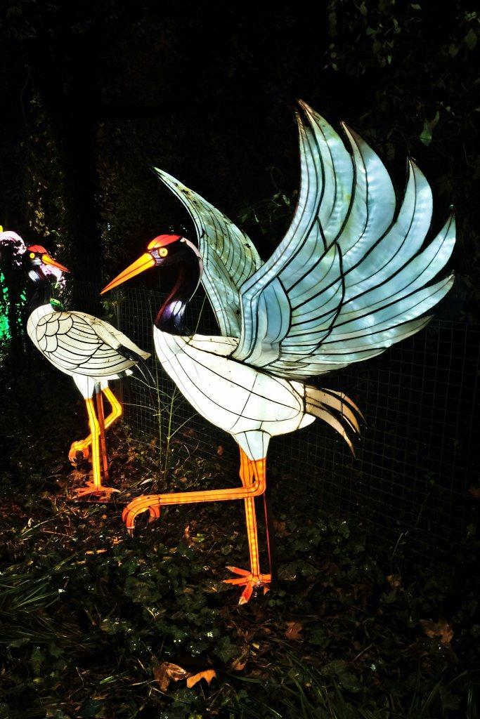 Illumination-JardinDesPlantes-0056
