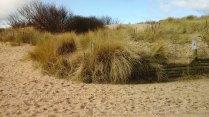 131 Sand Dune