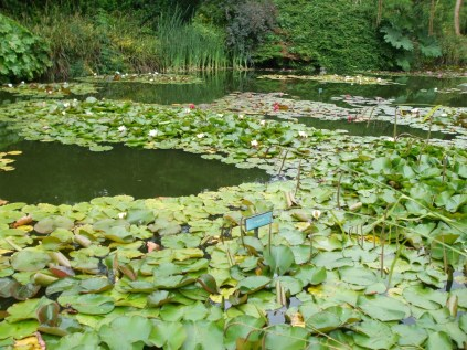 lake-and-water-lilies-burnby-gardens-july