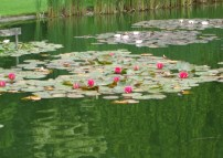 lake-and-water-lilies-july