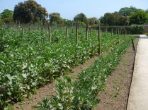 Area of the vegetable plots 1