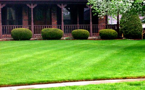 Как посеять газонную траву | Миллион советов