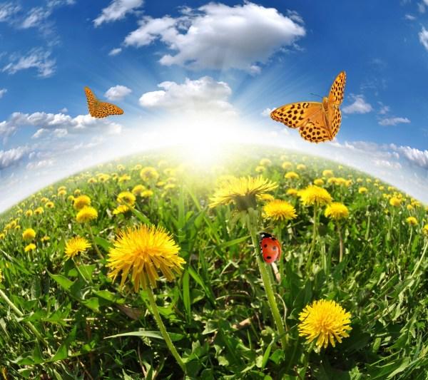 Бабочки и солнышко в поле с одуванчиками. Обои для ...