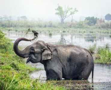 Elephant, Chitwan National Park, Nepal