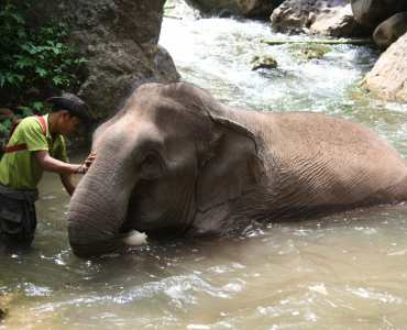 Green Valley Elephant Camp, Burma