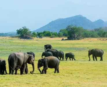 Elephant Gathering Sri Lanka