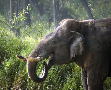 Elephant, Nagarhole National Park, India