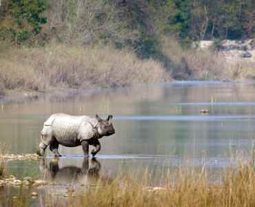 Wildlife Safaris in Chitwan National Park