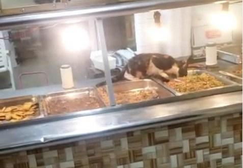 """Viral: gato """"comiendo"""" en la vitrina de un Pica Pollo Chino"""