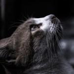 理念を唱える猫