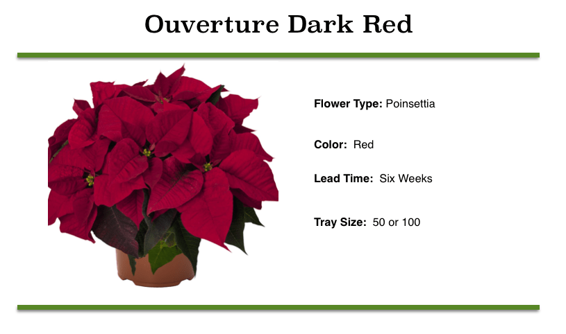 Ouverture Dark Red