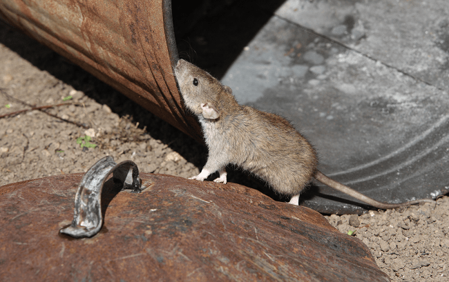 Complaints About Vermin In New York Soared By 80 Percent Last Month