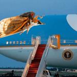 Cicadas Made Their Move On Biden's Press Plane and Won Total Domination
