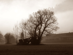 Morgenstimmung Amorbach 15.01.12 046
