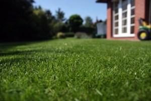 Zdravý trávník