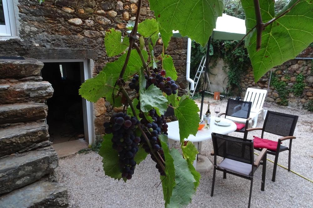 Portugali aed ja viinamarjad-MilVinhos veinipood