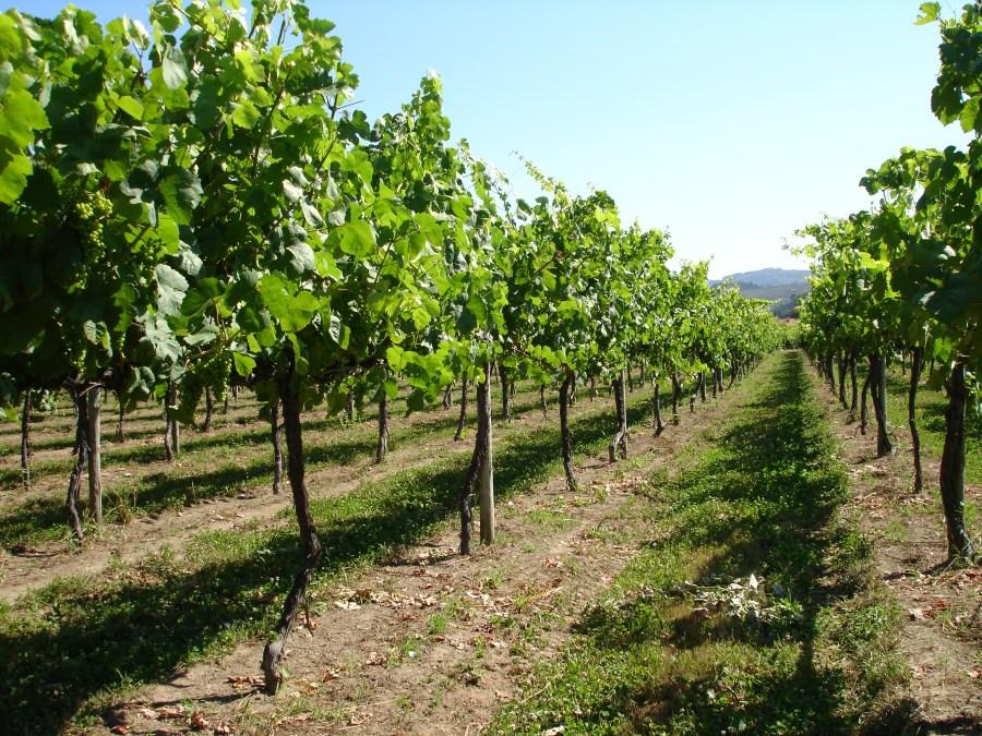 Vinho verde veinid Portugalist - MilVinhos