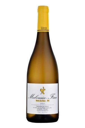 valge vein, Dao, Malvasia Fina