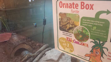 One of the center's resident box turtles peeks out from his hiding place to greet his visitor.