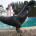 Oceans of Fun Sea Lion Slick Celebrates Golden Birthday on May 30th