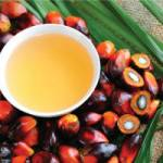 Naturopathic physician/author reveals shocking truths about palm oil