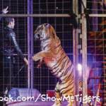Shrine Circus's Tiger Trainer Talks Animals and Performing