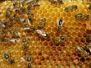 Bee well: Health from the hive (part 3)