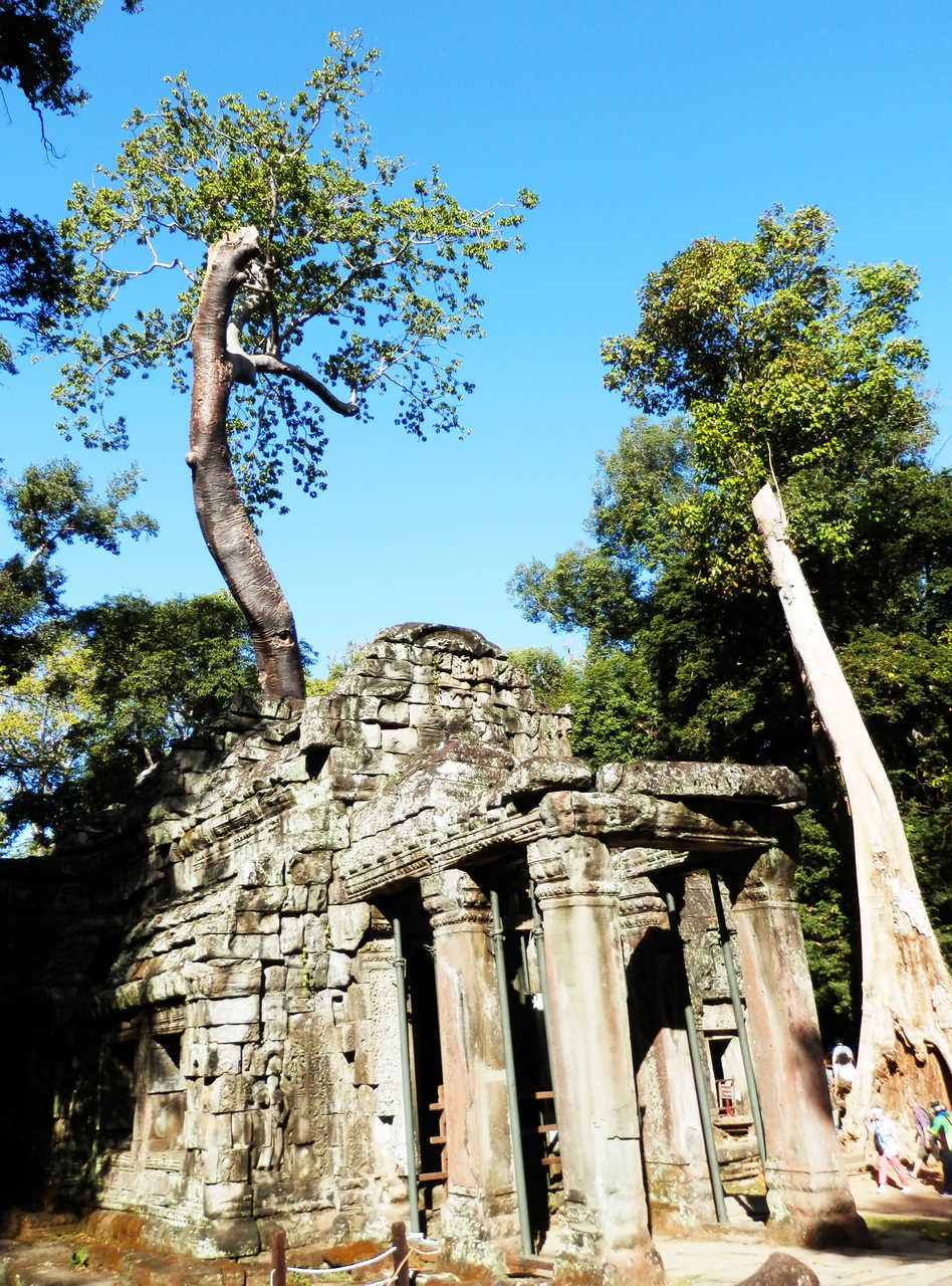 TaProhm1_Easy-Resize.com