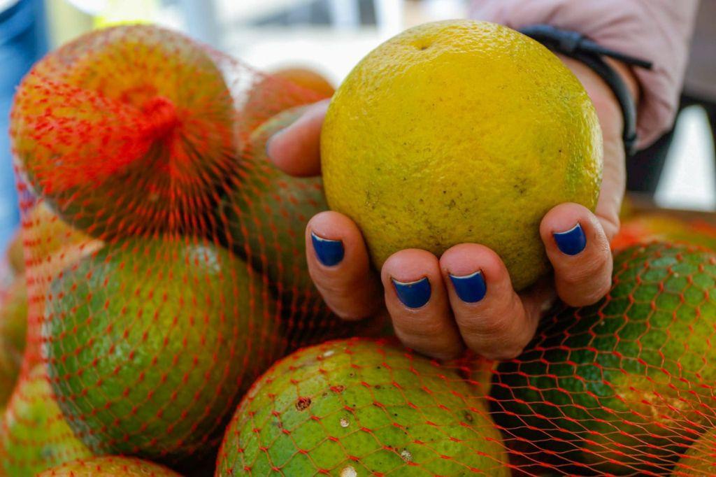 En Manizales, primera semana citrícola del país dio grandes resultados con más de 5 mil kilos de producción vendida.