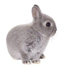 Gazapo conejo