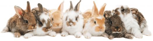 cuidados conejos