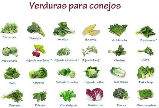 verduras para conejos