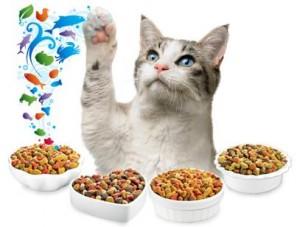 cuidados gatos pienso