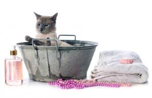 Cuidados gatos higinie